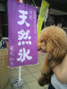 愛犬鈴ちゃん~トイプードル☆ライフスタイル~-2012080514120000.jpg