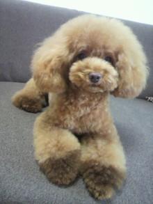 愛犬鈴ちゃん~トイプードル☆ライフスタイル~-2012080516020000.jpg
