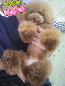 愛犬鈴ちゃん~トイプードル☆ライフスタイル~-2012080516030000.jpg
