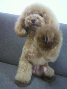 愛犬鈴ちゃん~トイプードル☆ライフスタイル~-2012080516060000.jpg