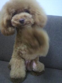 愛犬鈴ちゃん~トイプードル☆ライフスタイル~-2012080516070000.jpg