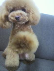 愛犬鈴ちゃん~トイプードル☆ライフスタイル~-2012080516070002.jpg