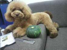 愛犬鈴ちゃん~トイプードル☆ライフスタイル~-2012080517290000.jpg