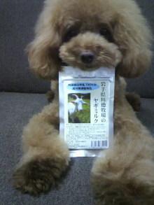 愛犬鈴ちゃん~トイプードル☆ライフスタイル~-2012080517280000.jpg