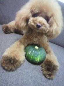 愛犬鈴ちゃん~トイプードル☆ライフスタイル~-2012080517270000.jpg