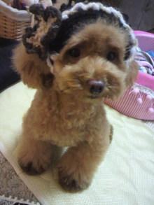 愛犬鈴ちゃん~トイプードル☆ライフスタイル~-2012080518580000.jpg