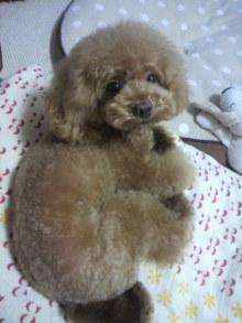 愛犬鈴ちゃん~トイプードル☆ライフスタイル~-2012080517540001.jpg