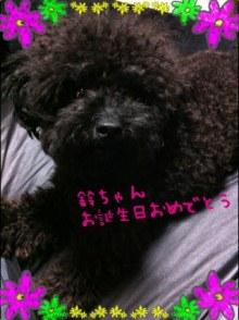 愛犬鈴ちゃん~トイプードル☆ライフスタイル~-1344174207.787105.jpg