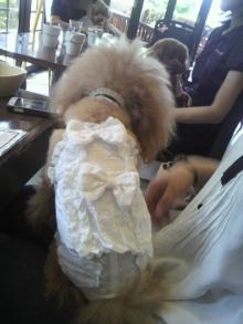 愛犬鈴ちゃん~トイプードル☆ライフスタイル~-2012080812530000.jpg