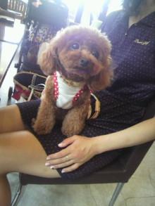 愛犬鈴ちゃん~トイプードル☆ライフスタイル~-2012080812530001.jpg