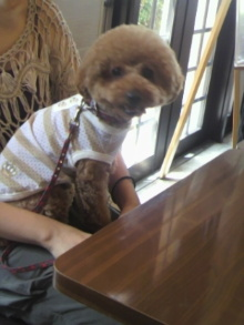 愛犬鈴ちゃん~トイプードル☆ライフスタイル~-2012080812550000.jpg