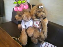 愛犬鈴ちゃん~トイプードル☆ライフスタイル~-2012080814060000.jpg