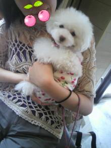 愛犬鈴ちゃん~トイプードル☆ライフスタイル~-2012080814080000.jpg