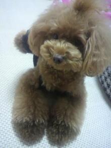 愛犬鈴ちゃん~トイプードル☆ライフスタイル~-2012080721170000.jpg