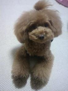愛犬鈴ちゃん~トイプードル☆ライフスタイル~-2012080721180002.jpg