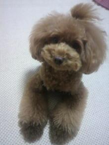 愛犬鈴ちゃん~トイプードル☆ライフスタイル~-2012080721180001.jpg