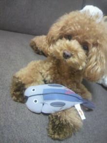 愛犬鈴ちゃん~トイプードル☆ライフスタイル~-2012081022140001.jpg