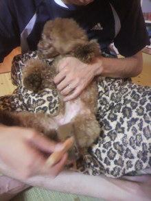 愛犬鈴ちゃん~トイプードル☆ライフスタイル~-2012081121560002.jpg