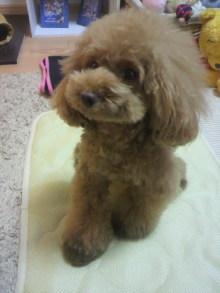 愛犬鈴ちゃん~トイプードル☆ライフスタイル~-2012081121580000.jpg