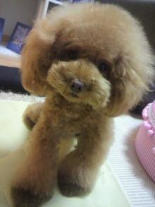 愛犬鈴ちゃん~トイプードル☆ライフスタイル~-2012081122020002.jpg