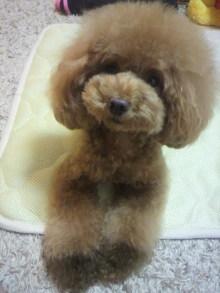 愛犬鈴ちゃん~トイプードル☆ライフスタイル~-2012081122020000.jpg