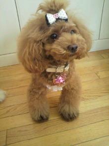愛犬鈴ちゃん~トイプードル☆ライフスタイル~-2012080811390002.jpg