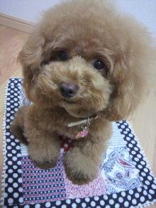 愛犬鈴ちゃん~トイプードル☆ライフスタイル~-2012081303310001.jpg