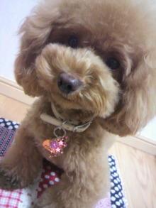 愛犬鈴ちゃん~トイプードル☆ライフスタイル~-2012081303260000.jpg