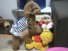 愛犬鈴ちゃん~トイプードル☆ライフスタイル~-2012082012360000.jpg