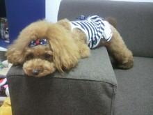 愛犬鈴ちゃん~トイプードル☆ライフスタイル~-2012082012370001.jpg