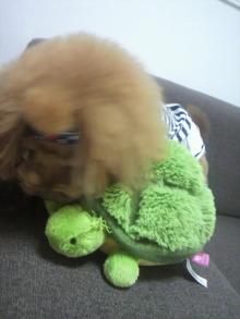 愛犬鈴ちゃん~トイプードル☆ライフスタイル~-2012082012390000.jpg