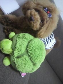 愛犬鈴ちゃん~トイプードル☆ライフスタイル~-2012082012400000.jpg