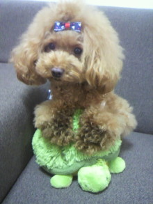 愛犬鈴ちゃん~トイプードル☆ライフスタイル~-2012082012410000.jpg