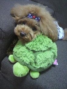 愛犬鈴ちゃん~トイプードル☆ライフスタイル~-2012082012430001.jpg