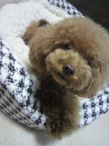 愛犬鈴ちゃん~トイプードル☆ライフスタイル~-2012082217480000.jpg