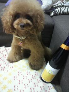 愛犬鈴ちゃん~トイプードル☆ライフスタイル~-2012082718310000.jpg