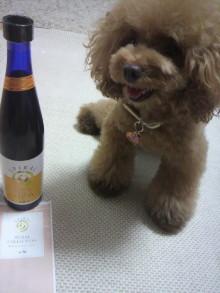 愛犬鈴ちゃん~トイプードル☆ライフスタイル~-2012082718340000.jpg