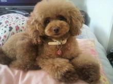 愛犬鈴ちゃん~トイプードル☆ライフスタイル~-2012082716510001.jpg