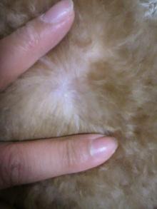 愛犬鈴ちゃん~トイプードル☆ライフスタイル~-2012082822150000.jpg