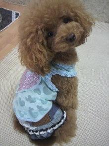 愛犬鈴ちゃん~トイプードル☆ライフスタイル~-2012082910000000.jpg
