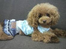 愛犬鈴ちゃん~トイプードル☆ライフスタイル~-2012082909590001.jpg