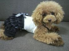 愛犬鈴ちゃん~トイプードル☆ライフスタイル~-2012082910300000.jpg