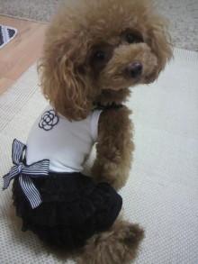 愛犬鈴ちゃん~トイプードル☆ライフスタイル~-2012082910280001.jpg