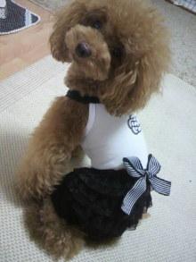 愛犬鈴ちゃん~トイプードル☆ライフスタイル~-2012082910280002.jpg