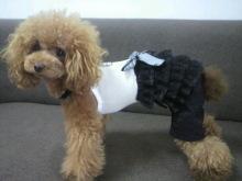 愛犬鈴ちゃん~トイプードル☆ライフスタイル~-2012082910280000.jpg
