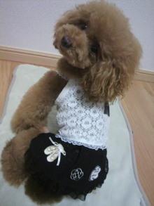 愛犬鈴ちゃん~トイプードル☆ライフスタイル~-2012082719070000.jpg