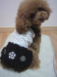 愛犬鈴ちゃん~トイプードル☆ライフスタイル~-2012082719080000.jpg