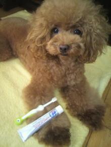 愛犬鈴ちゃん~トイプードル☆ライフスタイル~-2012090410530001.jpg