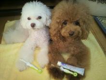 愛犬鈴ちゃん~トイプードル☆ライフスタイル~-2012090410560001.jpg