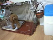 愛犬鈴ちゃん~トイプードル☆ライフスタイル~-2012091316110000.jpg